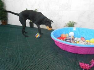 Dog-Playing-Indoor2